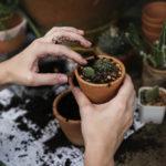 gardening-home
