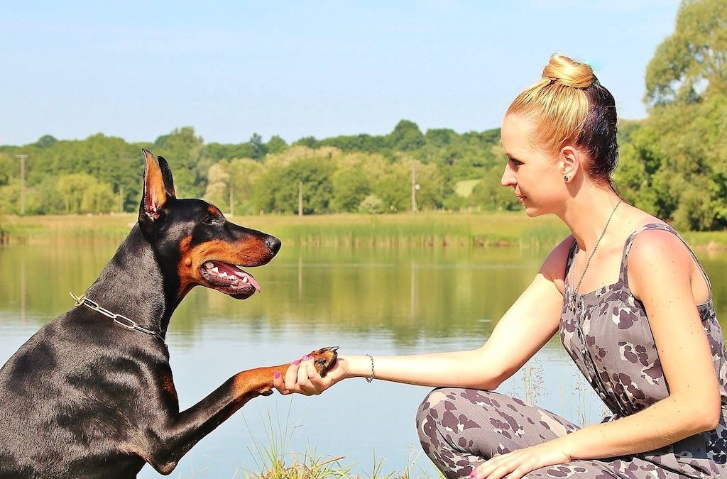 DCM and Pet Food: Things to Consider Before Feeding the Dog